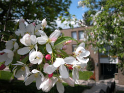 Flowers outside dormitory